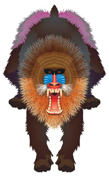 Latawiec BRAINSTORM - WNS Rainforest 44x28'' Nylon Mandrill
